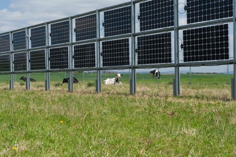 koeien met zonnepanelen